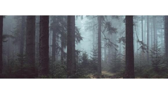 Lesníctvo